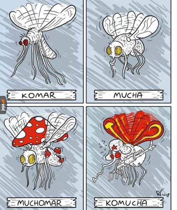 Rodzaje robaków