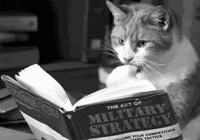 Koty przejeły Internet, bo są dobrymi strategami