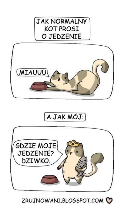 Jak mój kot prosi o jedzenie