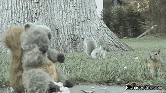Są dwa rodzaje wiewiórek