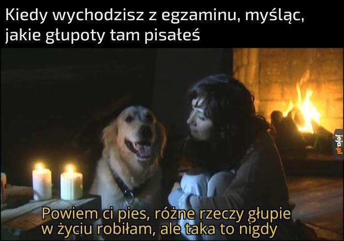 Pies zrozumie