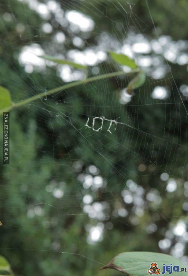 Nawet pająk...