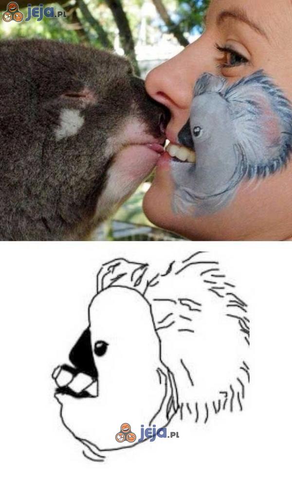 Piękny koala...