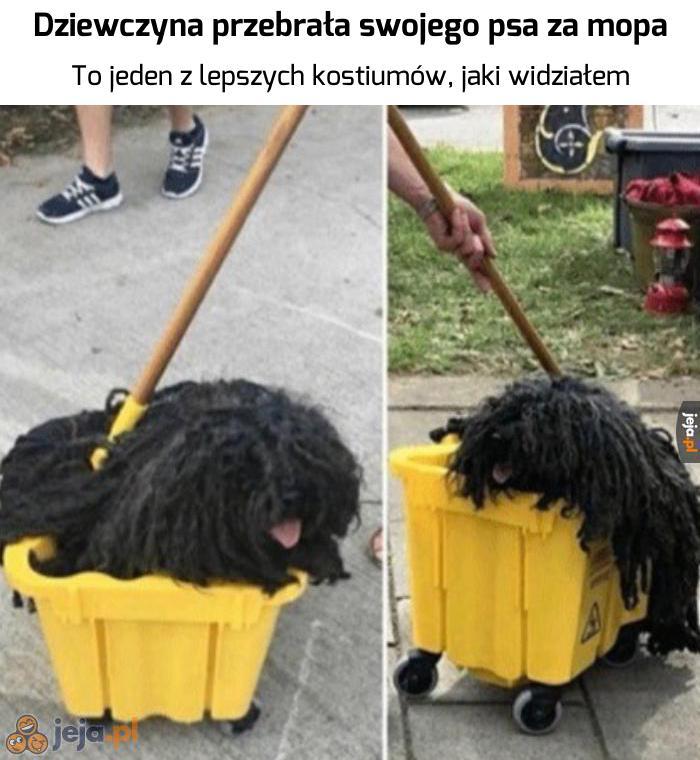 Jaki pies? Ja tu tylko mopa widzę