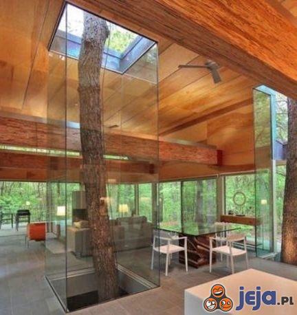 Drzewo w domu czy domek na drzewie?