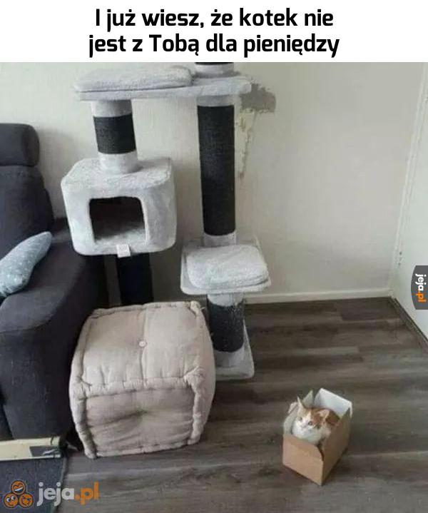 Koty nie są materialistami