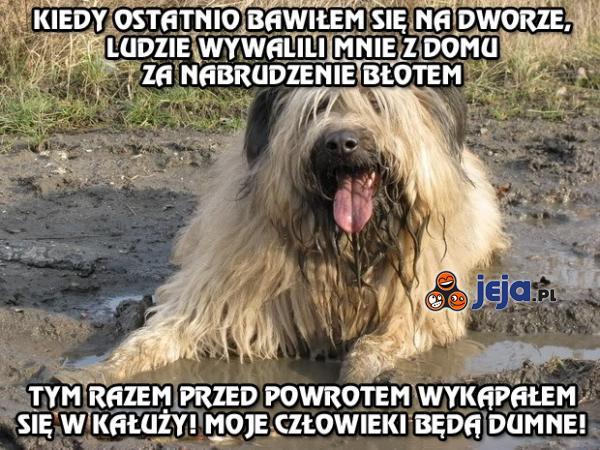 Psie podejście do higieny