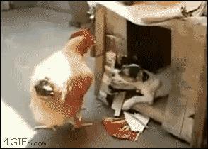 Jak poderwać kurę domową