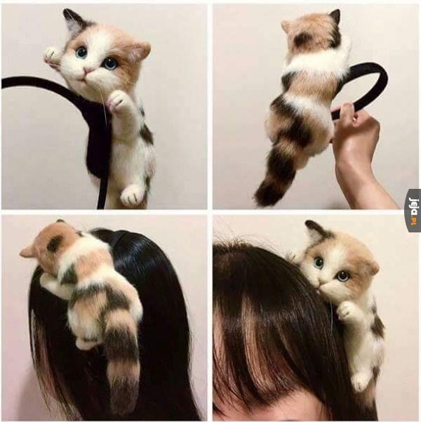 Kot na głowę...? Ok