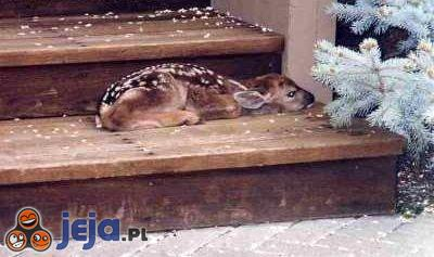 Sarenka na schodach
