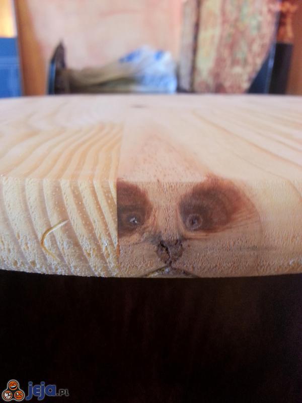 Mordka w stole