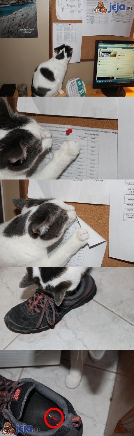 Ten kot to wcielenie zła