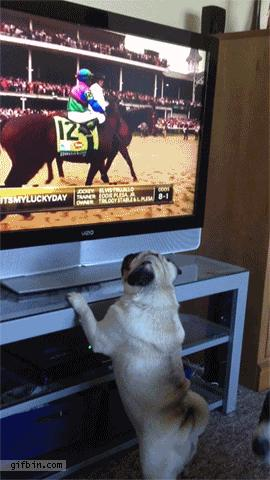Zafascynowany pies