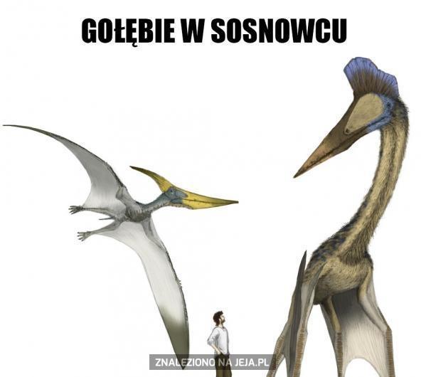 Wielkie mi co... To tylko gołębie z Sosnowca
