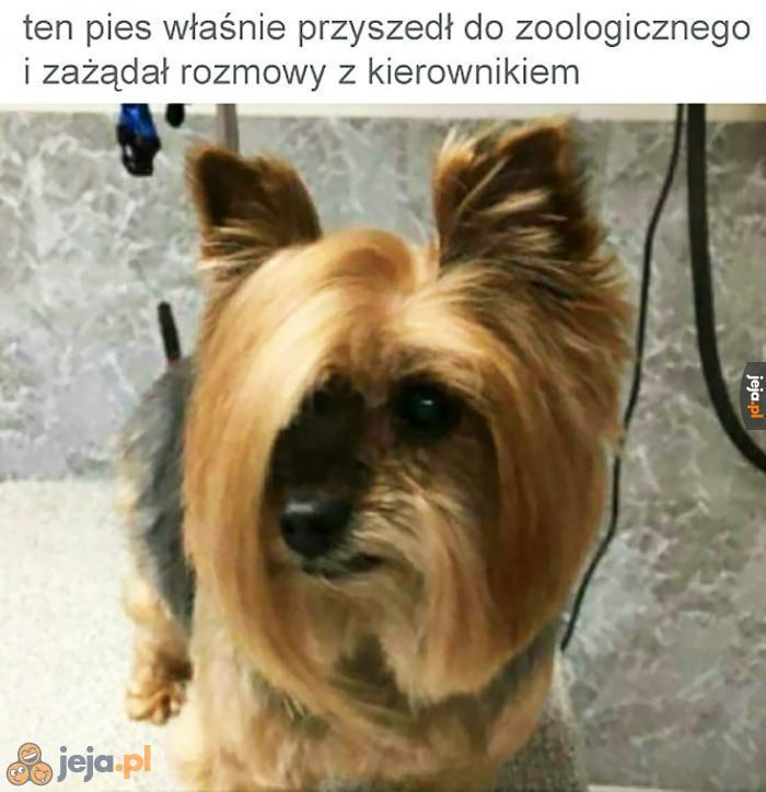 Jaka pani, taki pies