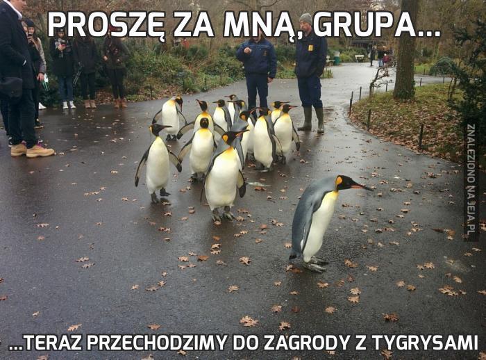 Proszę za mną, grupa...
