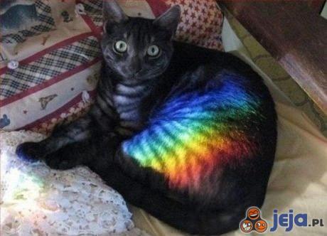 Nyan Cat: Początek