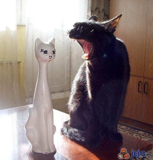 Zdenerwowany kotek