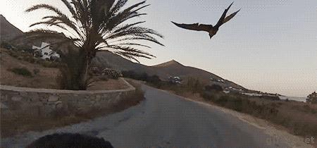 Nie ma to jak jazda z papugą u boku