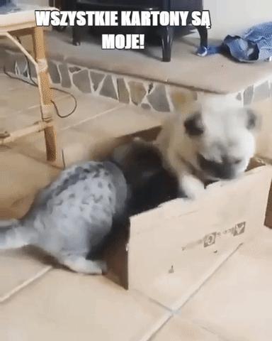 Wszystkie kartony są moje!