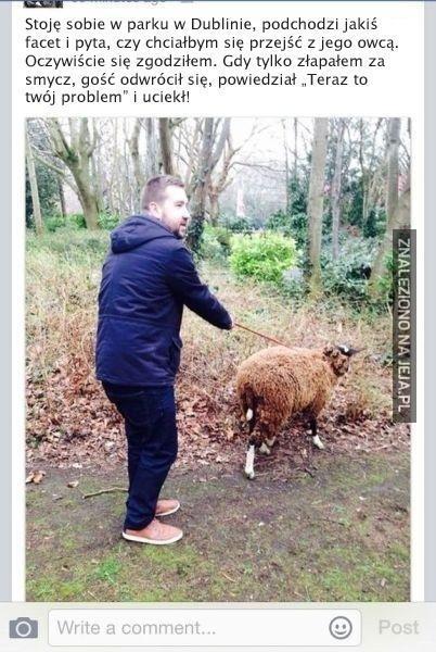 Zwykły spacer, zwykła owca