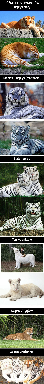 Niesamowite zwierzęta