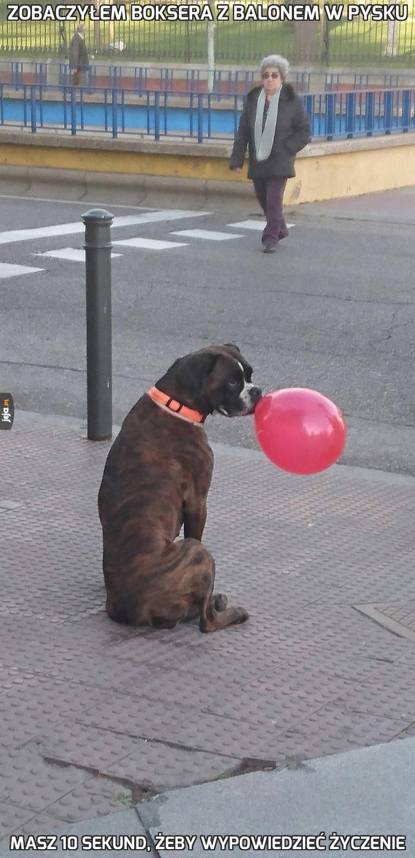 Zobaczyłem boksera z balonem w pysku