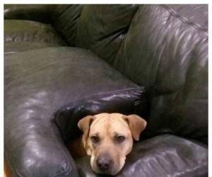 Miał zakaz spania na kanapie