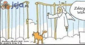 Dlaczego koty mają 9 żyć