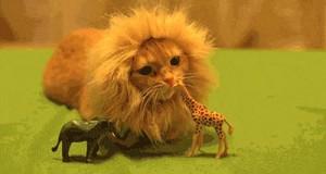 Potężny król dżungli