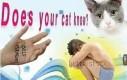 Twój kot wszystko widzi