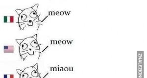 Jak robi kot?