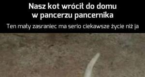 Pankotnik