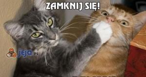 Koty wiecznie coś knują...
