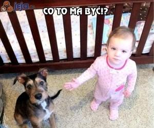 Prosiłam przecież o kucyka!