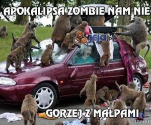 Apokalipsa zombie nam nie grozi