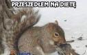Wiewiórki jedzą nie tylko orzechy