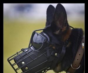 Pies policyjny przed misją specjalną