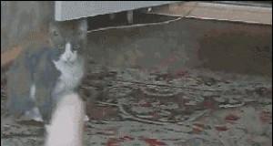 Opętany kot