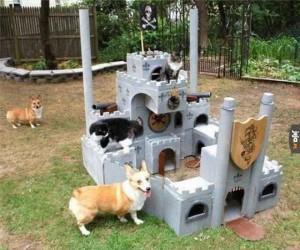 Przejmujemy ten zamek!