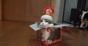 Świetny kamuflaż, panie kocie...