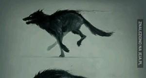 Transformacja mrocznego wilka