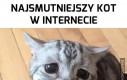 Najsmutniejszy kot w internecie