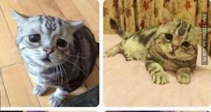 Bardzo smutny koteł jest bardzo smutny