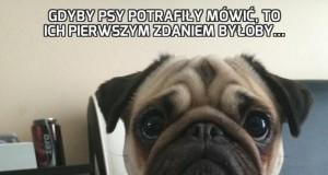 Gdyby psy potrafiły mówić, to ich pierwszym zdaniem byłoby...