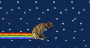Nyan dog!
