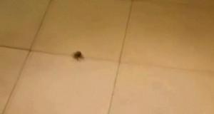 Aaaaaaa! Zabić bestię!