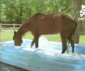 Pora umyć konia