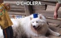 O cholera...