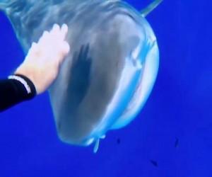 Pogłaszcz rekina dla darmowej przejażdżki